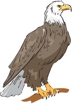 Philippine Eagle clipart Philippine 04 – Clipart Clipart