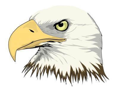 Philippine Eagle clipart 101 clipart Cliparts Philippine art