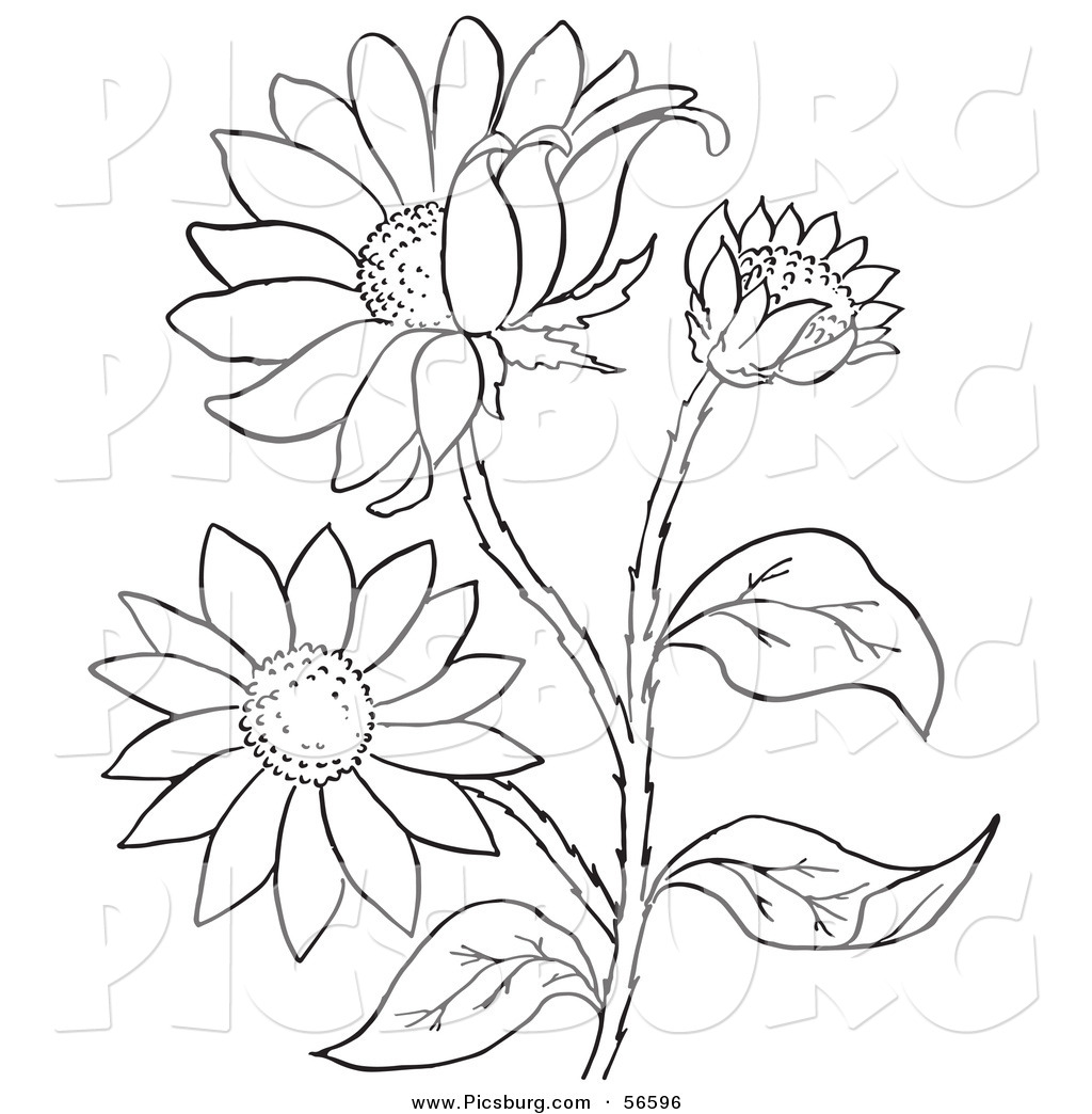 Plant clipart colouring Coloring Page Eyed of of