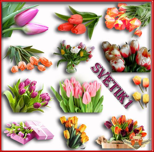Photoshop clipart For flower Tulips images Spring
