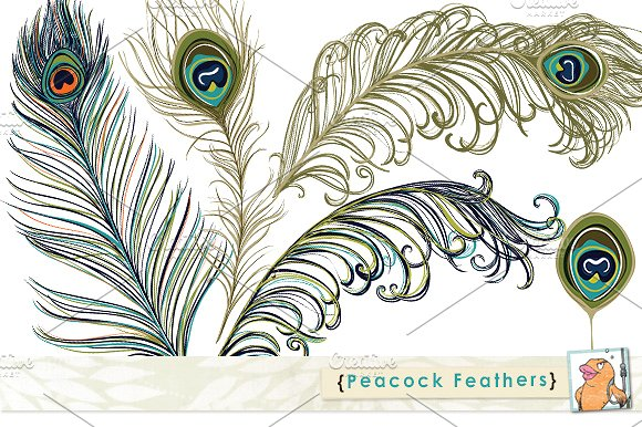 Photoshop clipart peacock tail Feather ~ Clip Art Market