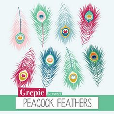 Photoshop clipart peacock tail Feather Feather  clipart: