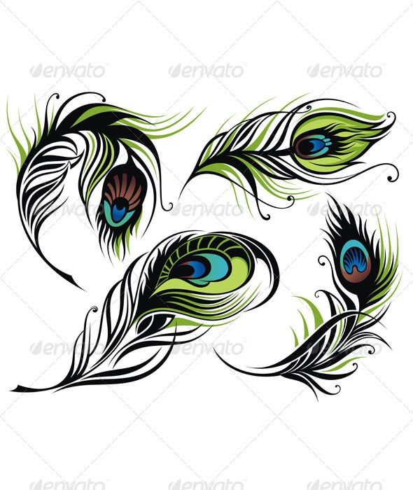Photoshop clipart peacock tail Pinterest Vector Stock graphics GraphicRiver