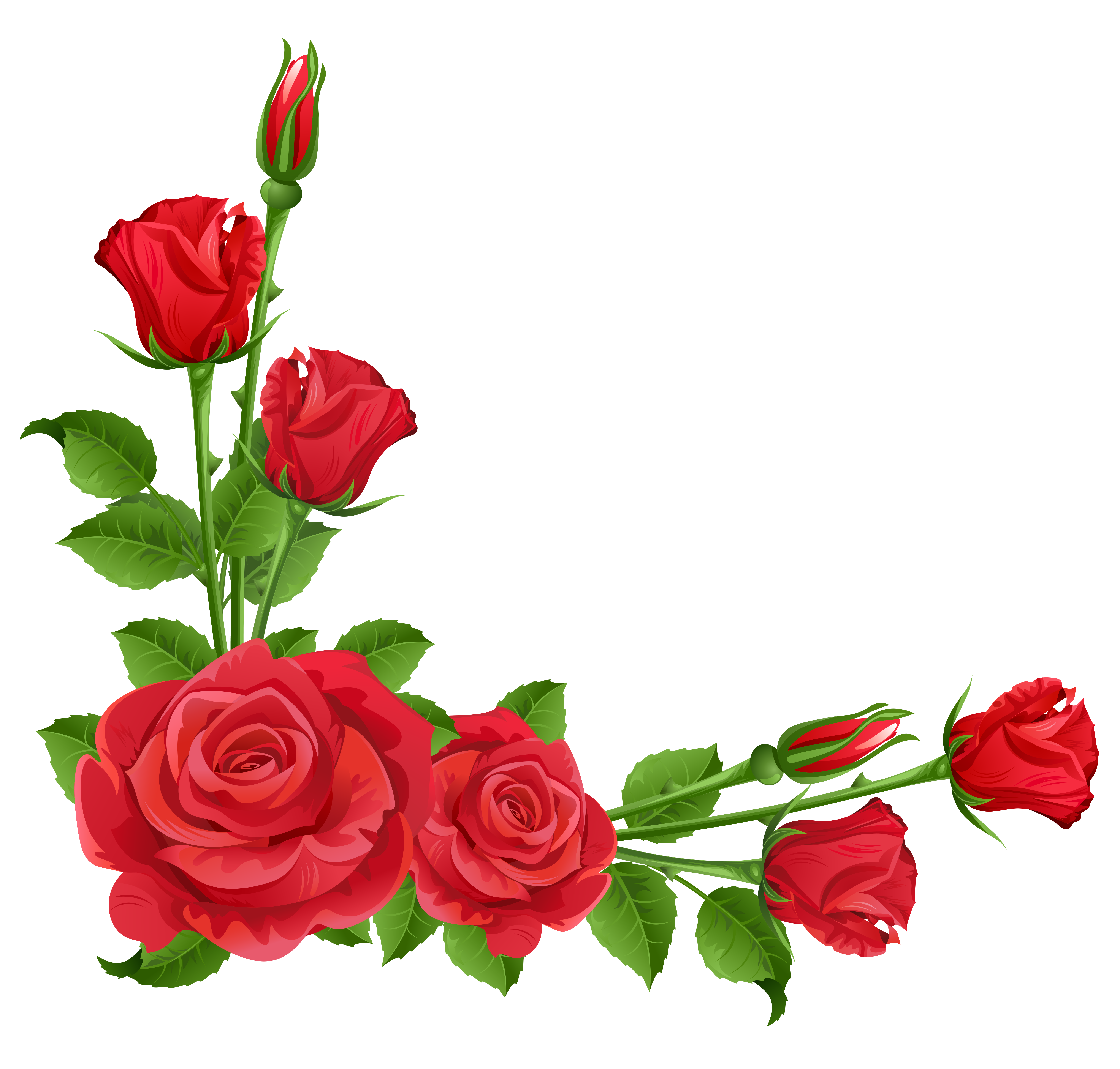 Pink Rose clipart public domain Png Red Transparent Roses Pinterest
