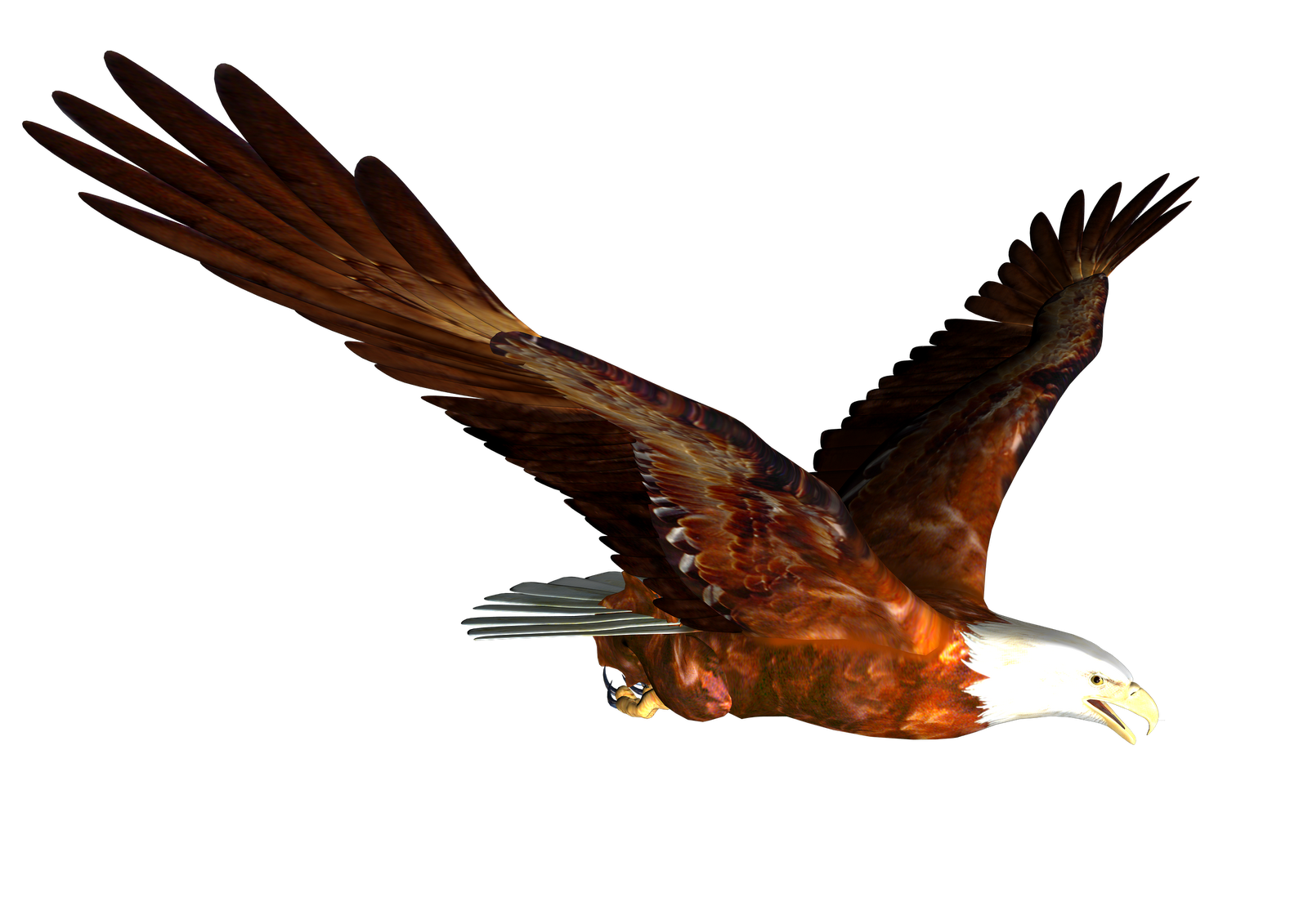 Gallery clipart soaring eagle Eagle Clip Clipart eagle Pictures