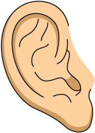 Pice clipart ear In Download Clipart Clipart Food