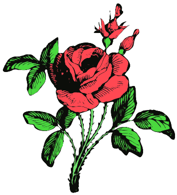Pink Rose clipart rose bush Images Clipart Free Clipart graphics