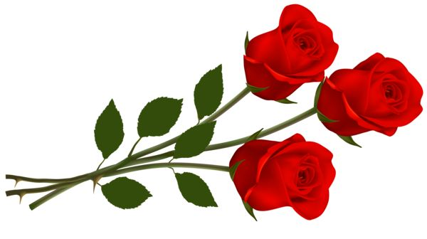 Red Rose clipart rose flower #3