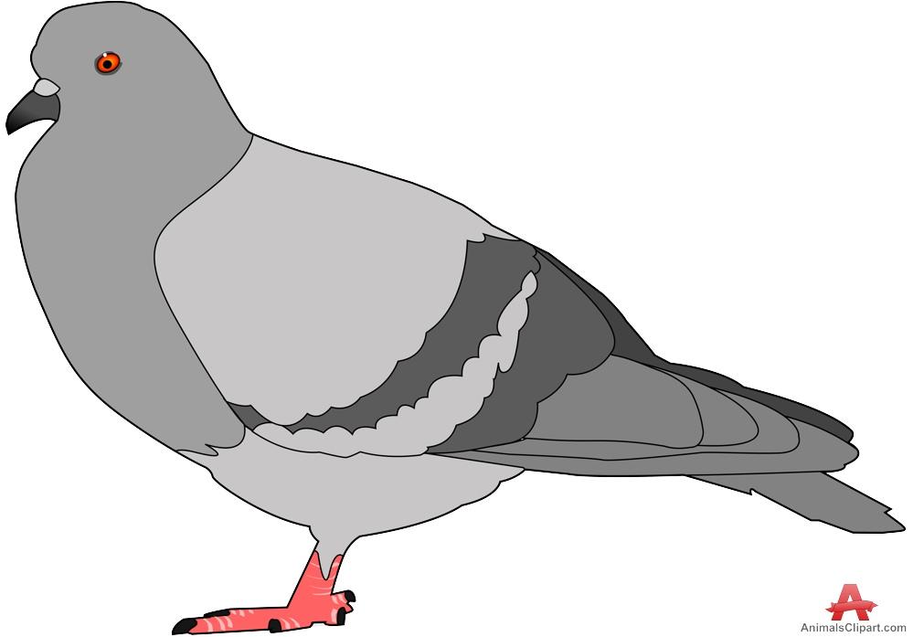 Bird clipart pigeon Bird clipart image Pigeons download