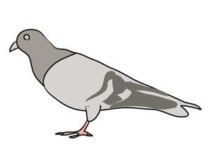 Pigeon clipart Art art clip Pigeon art