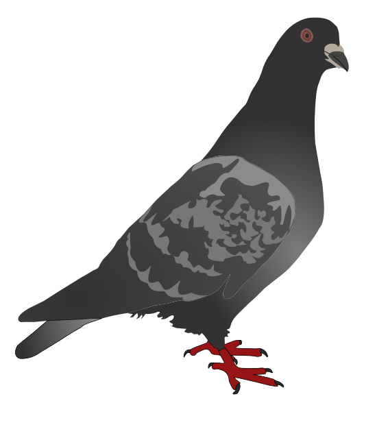 Pidgeons clipart Clip Pigeons 4 use to