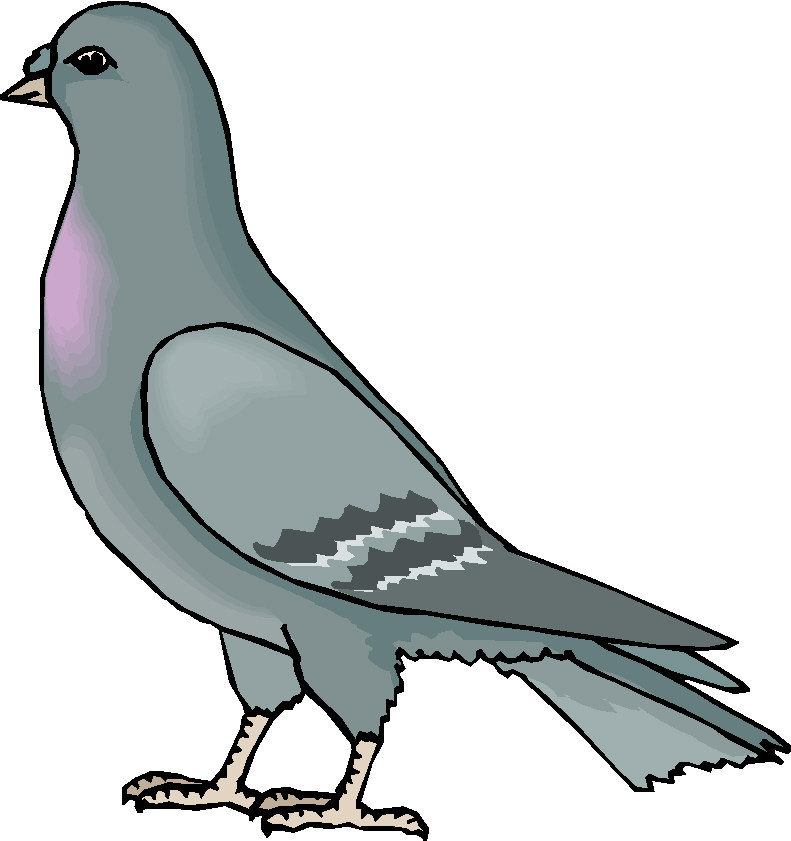 Pidgeons clipart Clipart Images Free Free Pigeon
