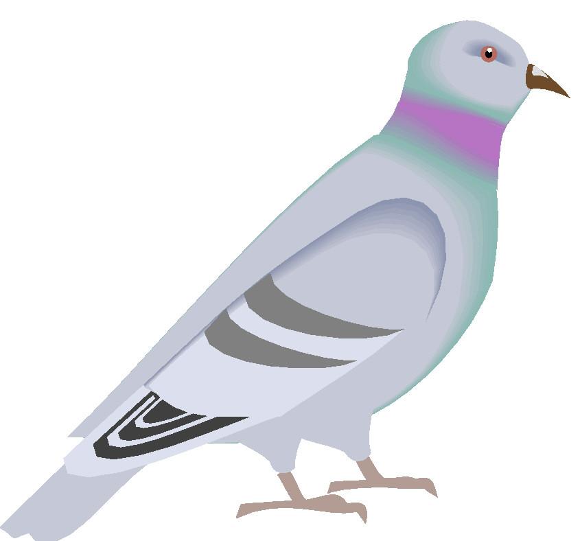 Bird clipart pigeon Art Art Clip clip Pigeons