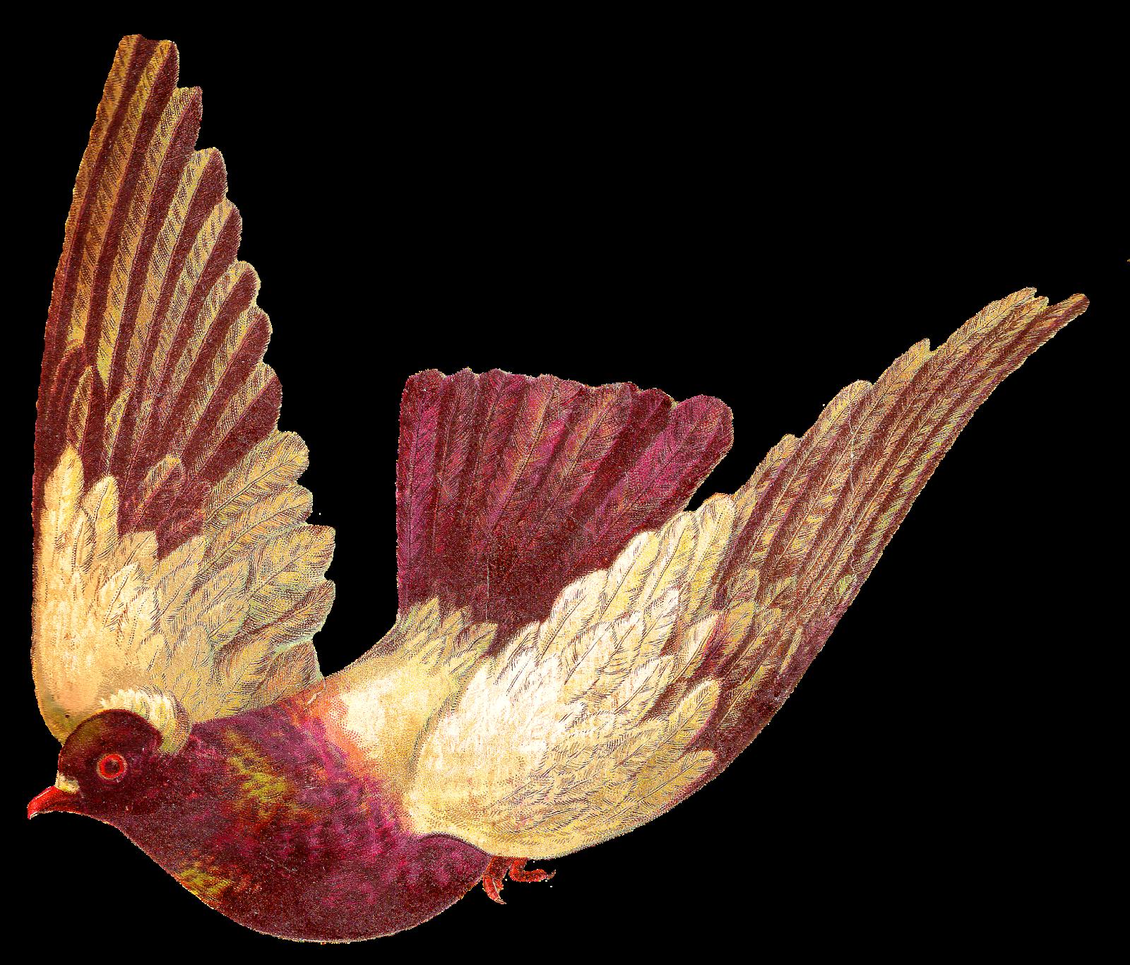 Pigeon clipart simple bird Animal Pigeon Digital Images: pigeon