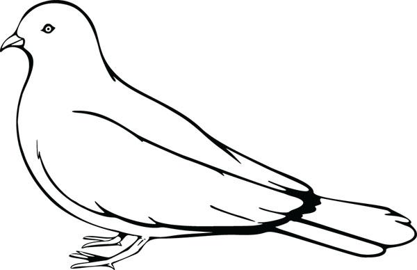 Bird clipart pigeon Art White White Art Clip