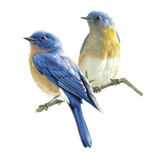 Pidgeons clipart blue bird Birds more Birds on Pin