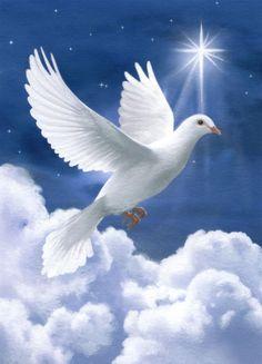 Peace Dove clipart air animal #6