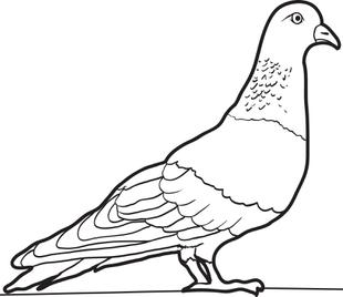 Pidgeons clipart coloring  Kids Page Pigeon for