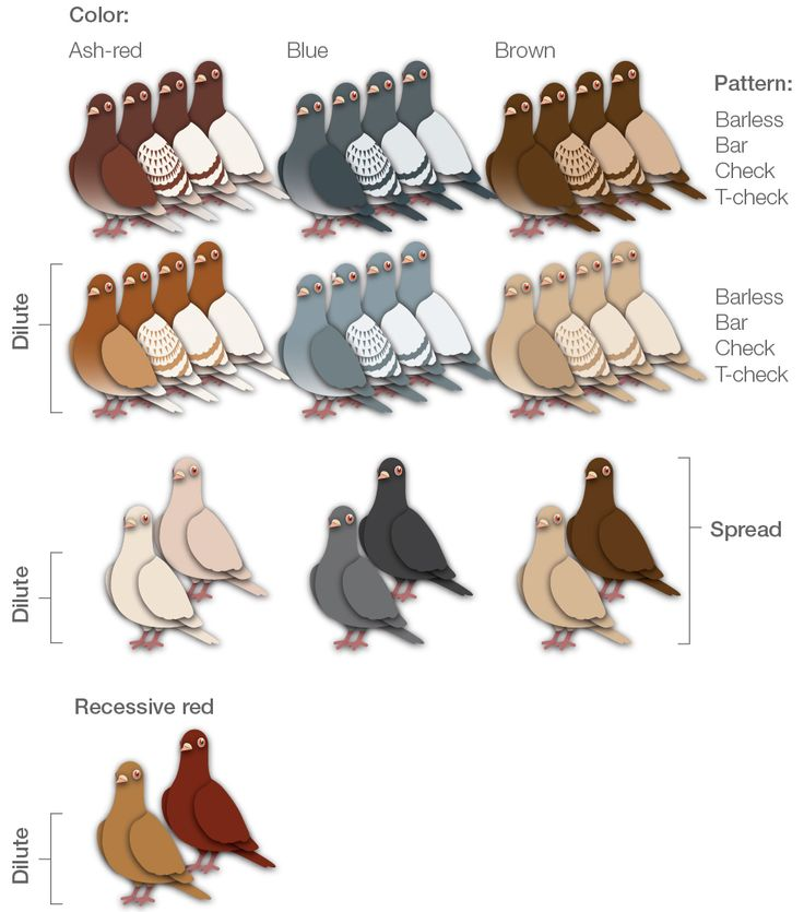 Pidgeons clipart head On and Interactions Pigeon Best