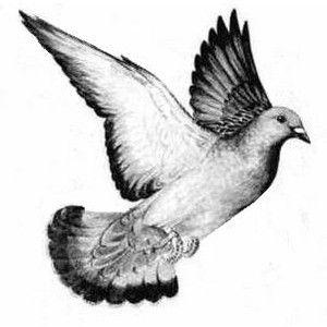 Pigeon clipart love pigeon Pigeon Love on love 229