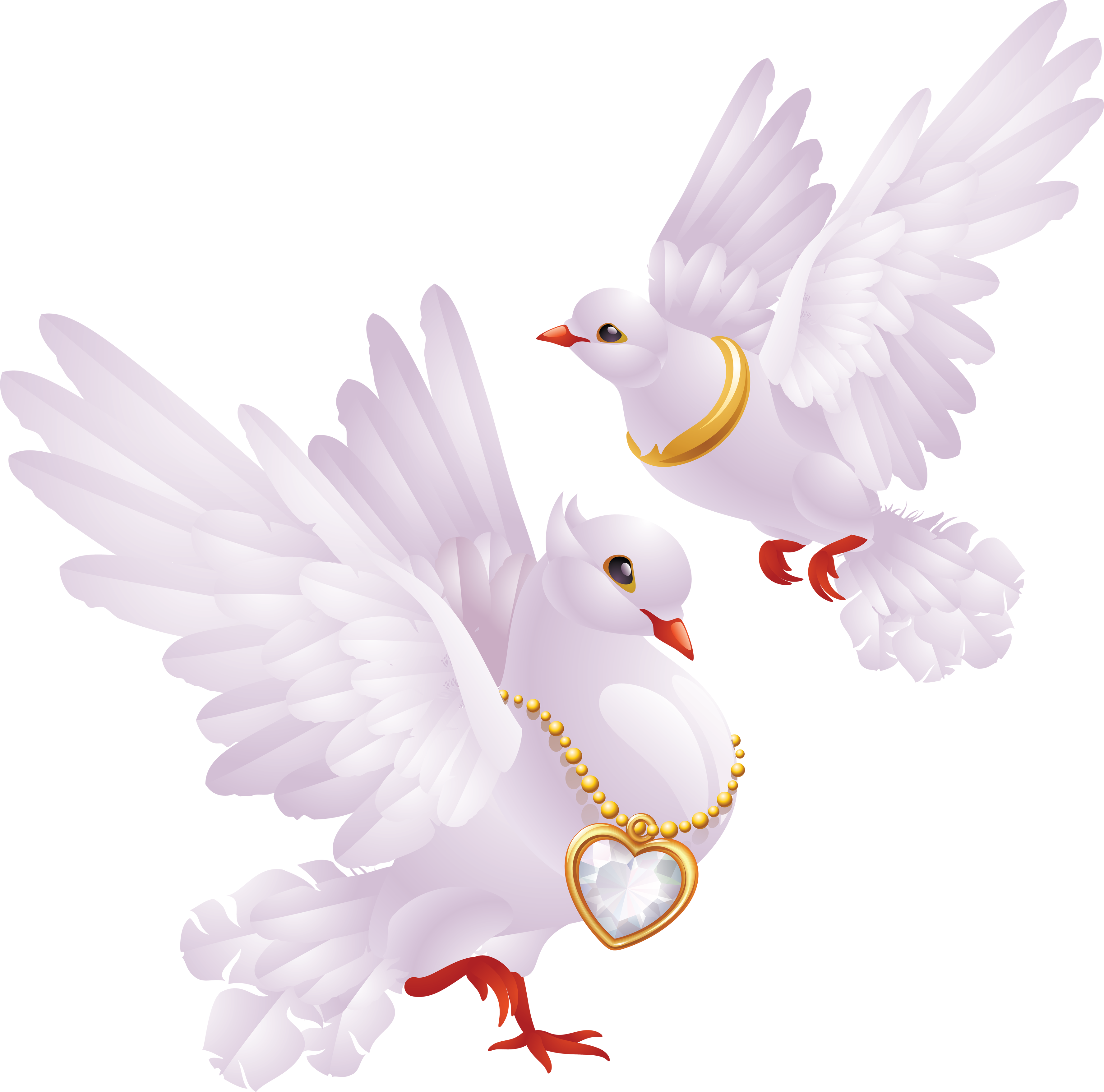 Pigeon clipart love pigeon White PNG free png pigeons