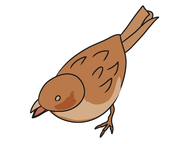Wren clipart sparrow Clipart on  Free and