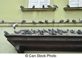 Pidgeons clipart town Pictures  Warsaw Old and