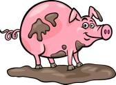 Pig clipart muddy pig Downloads Views 223; Clipart Muddy