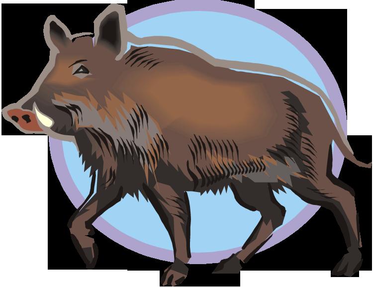 Boar clipart warthog Boar Clipart Warthog Wild Free