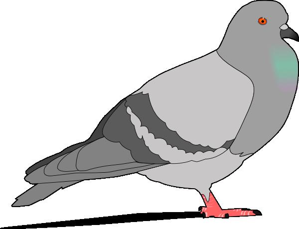 Bird clipart pigeon Art Art Images Panda Clipart
