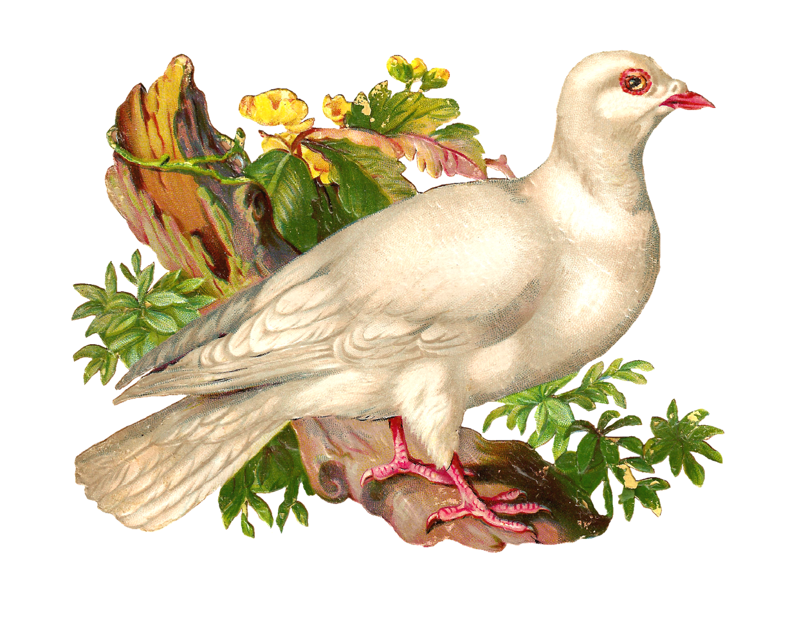 Pigeon clipart love pigeon Free What a on Bird
