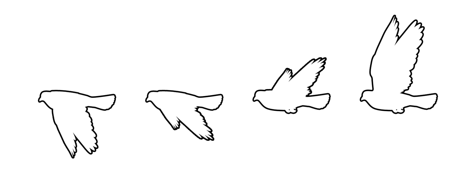 Pigeon clipart simple bird Wing can shows sequence This