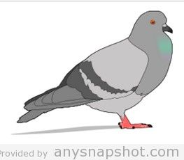 Pigeon clipart vector Free This 3 is Commons