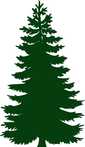 Pine clipart #9