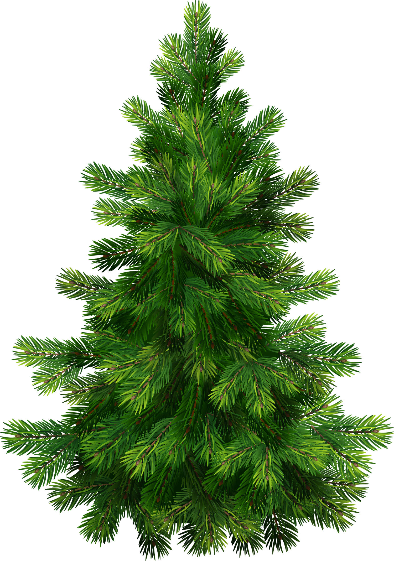 Pine clipart #15