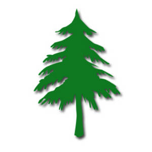 Pine clipart #11