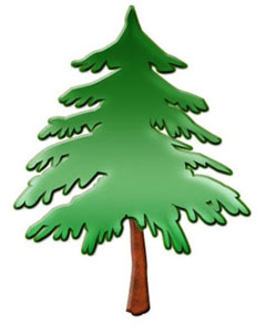 Pine clipart #7