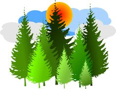 Pine clipart forestry Pine Tree ETC Canada! and