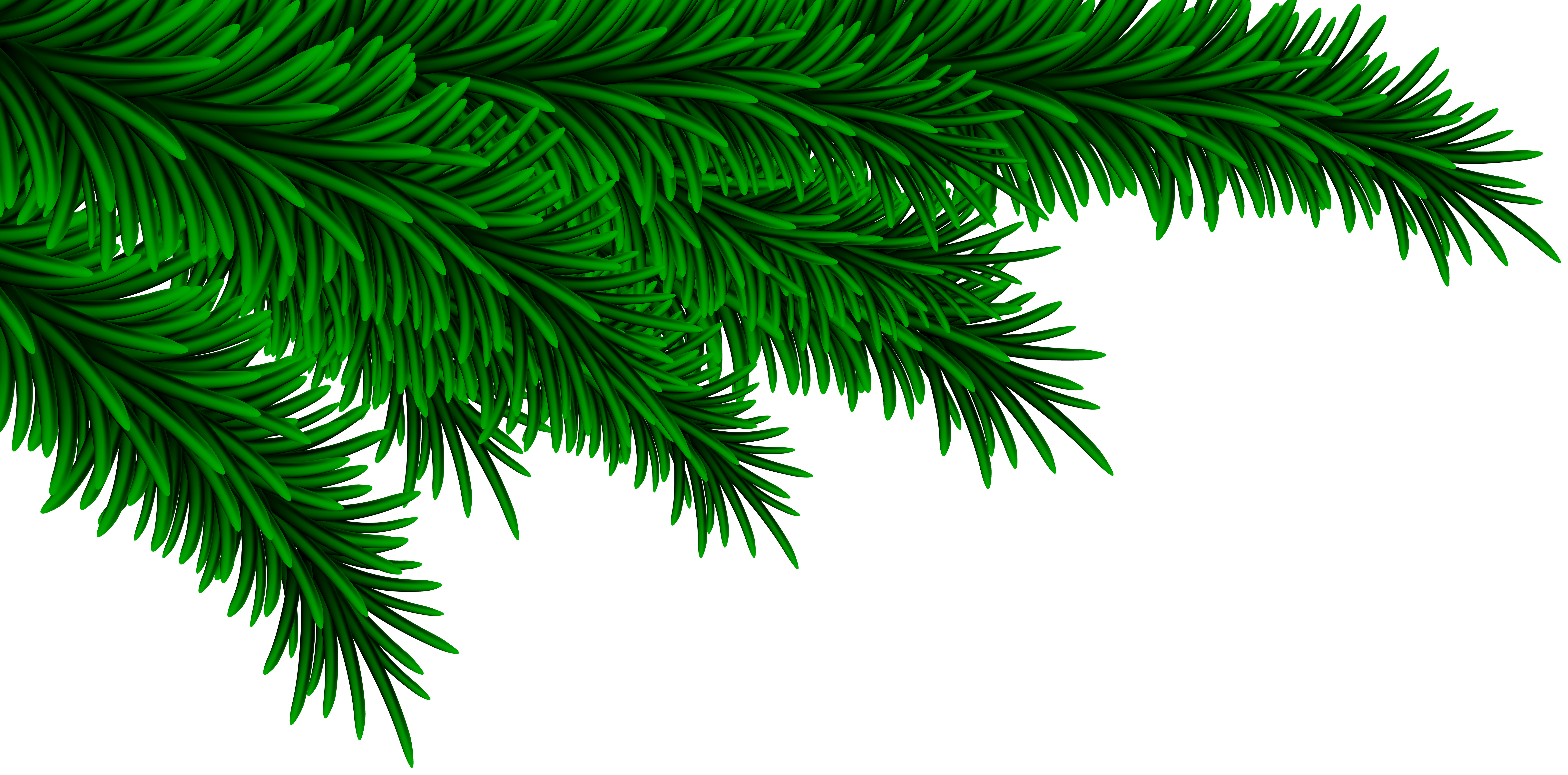 Pine clipart transparent Pine Art Clip Branches Gallery