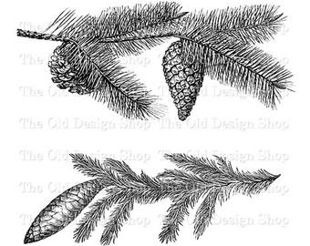 Pine Cone clipart vintage JPG art Botanical Vintage Image