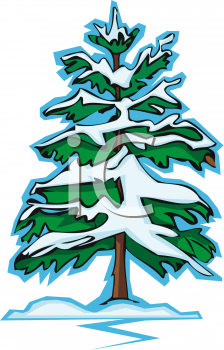 Pine clipart winter Trees Clipart snowy%20pine%20tree%20clipart Images Panda