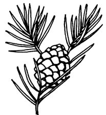 Pine Cone clipart Clip Images Pine Art Cone