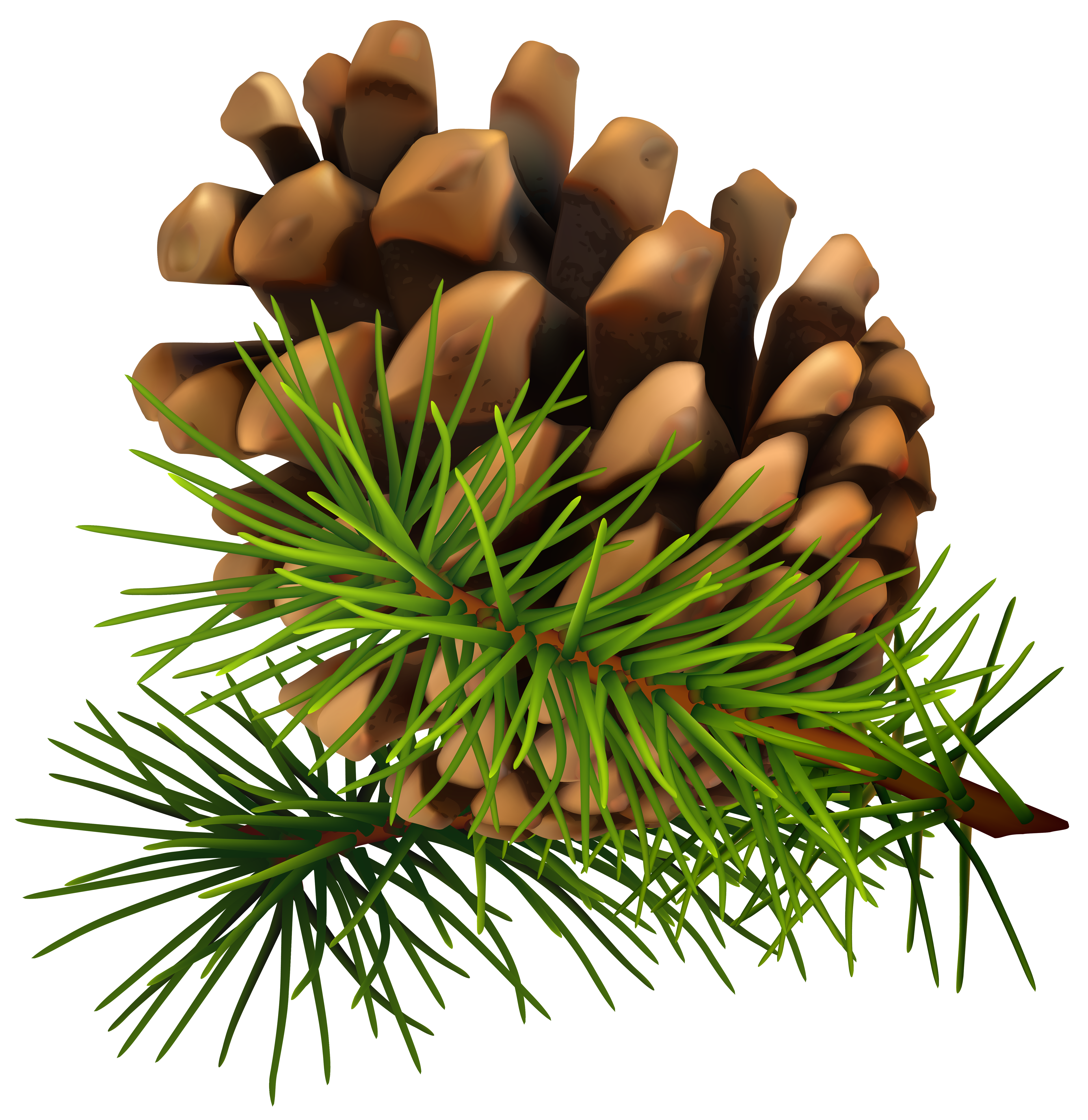 Pine Cone clipart Savoronmorehead Cone Pinecone Clip PNG