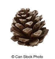 Pine Cone clipart Free cone  cone 3