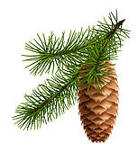 Pine Cone clipart border Branch cone Clip Pine Royalty