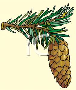 Pine Cone clipart cartoon Clipart on Pinecone on a