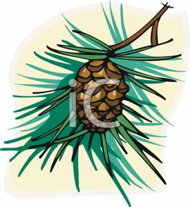 Pine Cone clipart cartoon (74+) cone Pine pine cartoon