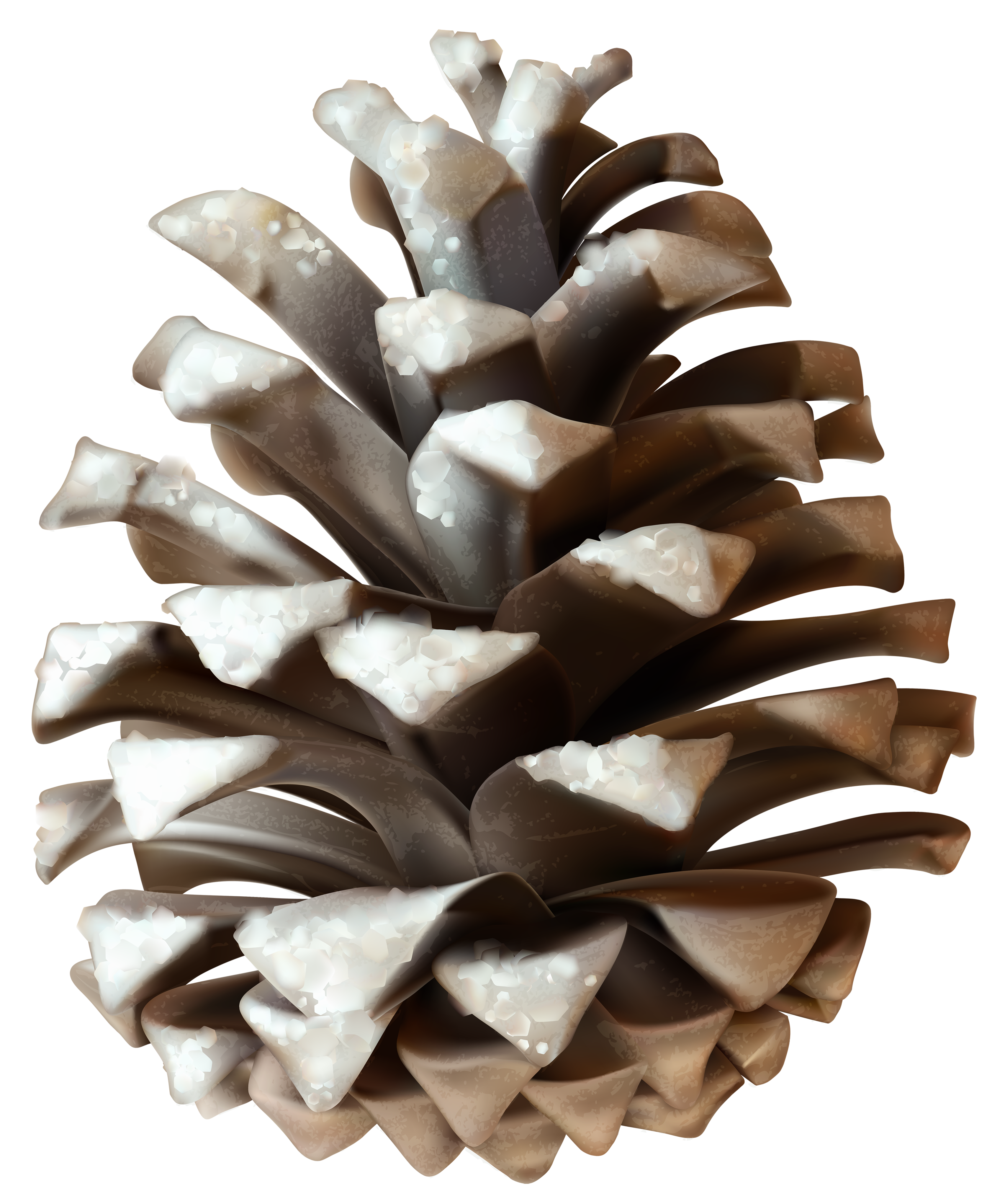 Pine Cone clipart cartoon High Yopriceville size  PNG