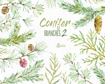 Pine Cone clipart coniferous forest 2 pines clipart Conifer Coniferous
