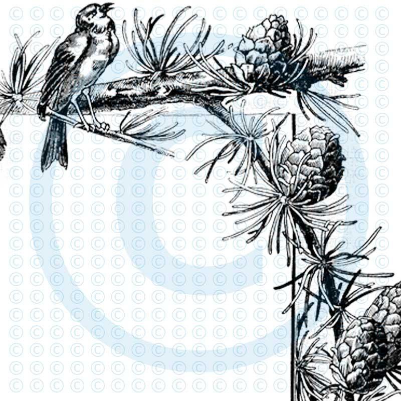 Pine Cone clipart corner Art Cones – Download Pine